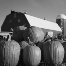 Pumpkin Festival at Shepard Cross