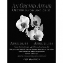 Orchid Obsession