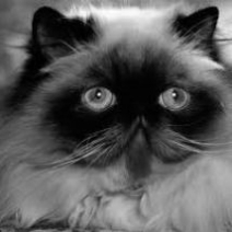 Cat-A-Palooza