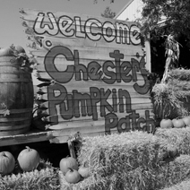 Chester's Pumpkin Patch