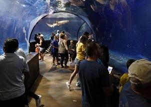 Oklahoma Aquarium celebrates 15 years, new exhibit