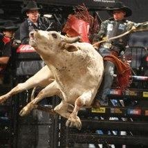 Bullriding!