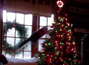 Cats vs. Christmas Trees In Epic Holiday Battle
