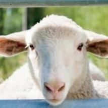 Tulsa County Fair Junior Livestock Show