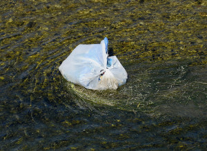 California Nears Plastic-Bag Ban