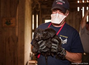 Heartwrenching Photos Show Dozens Of Dogs Rescued From Rusty Cages, Windowless Rooms