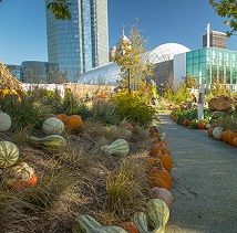 Pumpkinville at Myriad Gardens