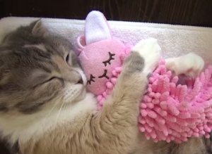 This Sleepy Kitty Understands The Power Of A Blissful Snuggle